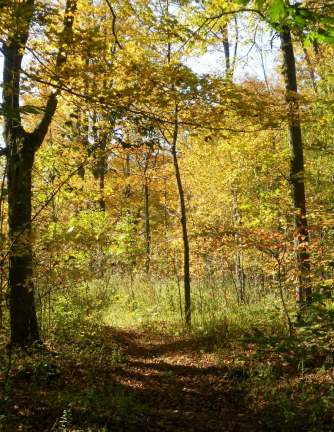 Trail through hardwoods area in autumn.