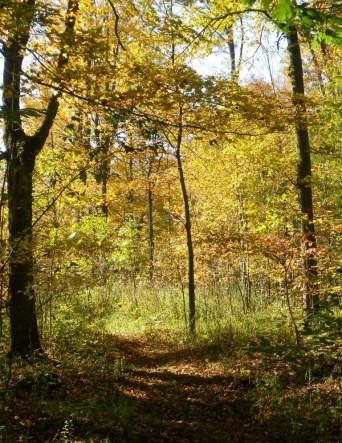 Trail through hardwoods area in autumn.