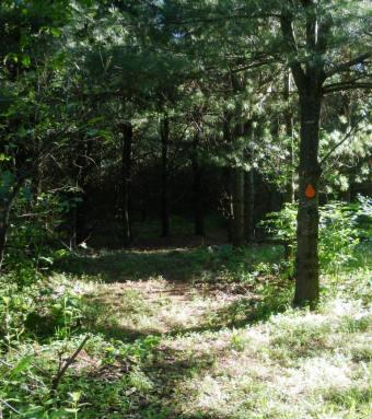 Entrance to orange loop near guest cabin.