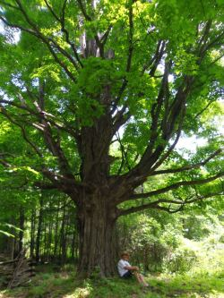 Spirit Tree - click to enlarge