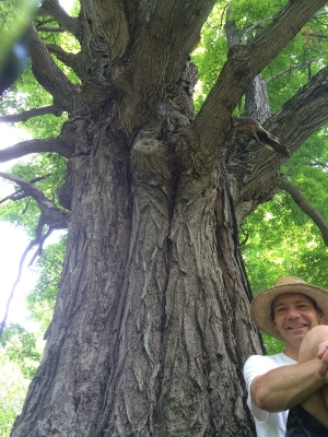 spirit_tree_branches
